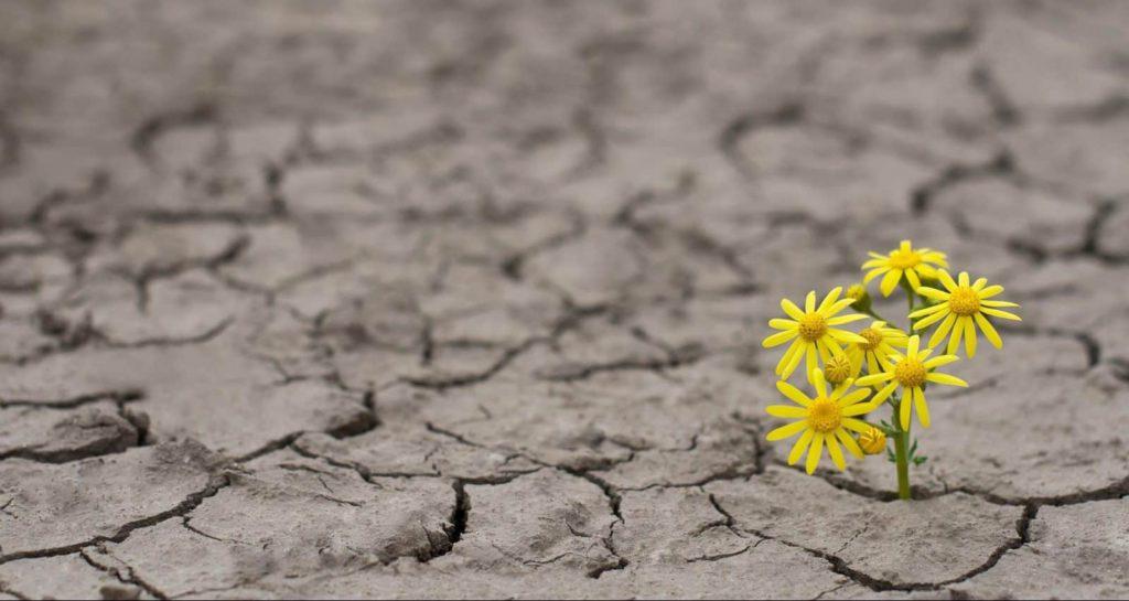 a yellow flower in a barren area