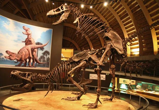 a dinosaur skeleton depicting the position of other pair on screen