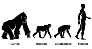 pic showing the evolution of man from other animals