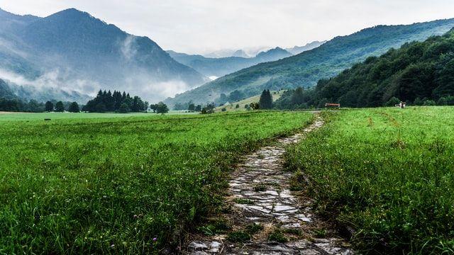 A Path Alongside Green Grass